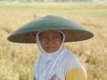 Rijstplukster op West-Java